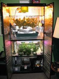 Small Picture 268 best Smoke images on Pinterest Cannabis Grow room and