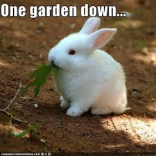Image result for lol rabbits