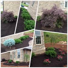 Landscaping has begun! Dwarf Japanese maple, knockout rose bushes, weeping  Japanese cherry tree