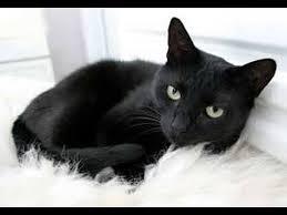 نتيجة بحث الصور عن تعرف على رؤية القطة فى المنام