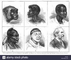 Evolution Of Man Chart Evolution Nprogressive Development Of Man Evolution