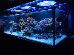 Saltwater Aquarium Lighting Guide