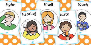 My Senses Display Posters - Smell, sight, sound, hearing, display ...