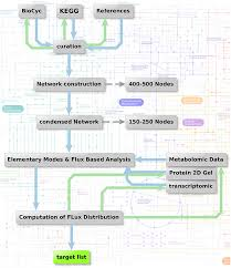 Carbohydrate Metabolism Chart Metabolic Network Modeling Strategy Flow Chart Of Analysis
