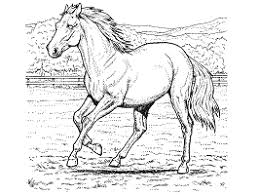 Parents, teachers, churches and recognized nonprofit organizations may print or copy multiple horse coloring. Horses Coloring Pages And Printable Activities 1