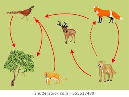 animal food chain. Simple Food Food Chain In Kazakhstan River Syrdaria Riveru0027s Forest Intended Animal Chain A
