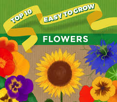 top 10 easy to grow flowers and seeds