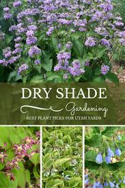 Small Picture dry shade gardening