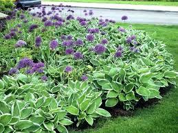 perrenial garden designs cut flower garden design ideas perennial flower garden ideas perennial flower garden design