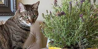 keeping your cat out of your houseplants