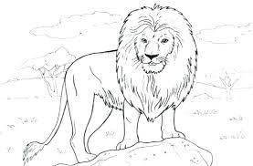 mountain lion coloring pages lion color sheet lion coloring sheet lion coloring pages free printable lion