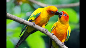 beautiful love birds show keep your mind peacefully with you