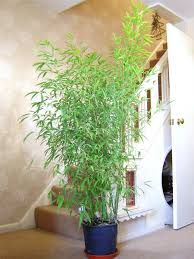 Small Picture Garden Design Garden Design with privacy potted bamboo plants