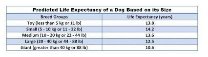 Dog Life Expectancy Chart How Long Will Your Dog Live Psychology Today