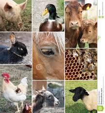 real farm animals collage. Brilliant Animals Collage Of Farm Animals On Real