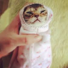 cute kittens in costumes. Beautiful Kittens Kitten In Costume For Cute Kittens In Costumes