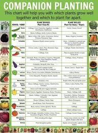 Vegetable Companion Planting Charts Companion Planting Chart Lots Of Great Info Video Tutorial