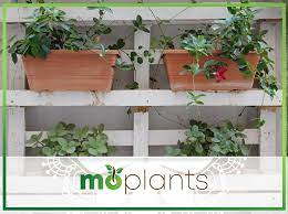 window box herb gardening for beginners