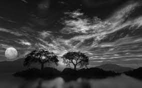 74+] Black And White Nature Wallpaper ...