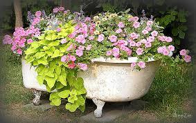 flower garden in a bathtub 1001 gardens