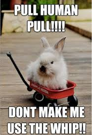Bunny Meme on Pinterest | Koala Meme, Netherland Dwarf and Happy ... via Relatably.com