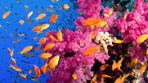 Get Fish and Corals - Microsoft Store