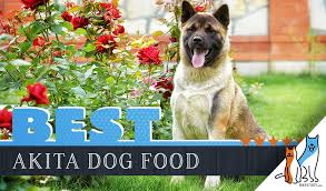 14 Best Dog Foods For Akitas Our 2019 In Depth Feeding Guide