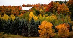 petoskey area fall color update