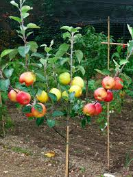 7 Easily Propagated Fruits For Transforming Your Backyard Into A Do Not Cut The Tree To Get The Fruit