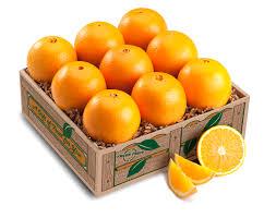 navel oranges taster