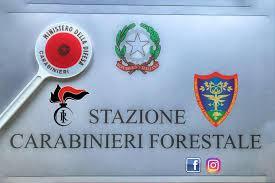 Risultati immagini per carabinieri forestali
