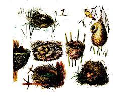 Класс Птицы Общая характеристика класса Реферат кочевки и перелеты