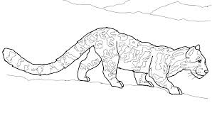 Snow Leopard Coloring Pages Snow Leopard Coloring Page Animals Town