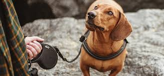 Pet Food Chart Labrador Dog Food Chart Anything Labrador
