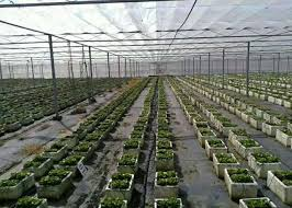 breathable weed control mesh for