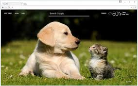 dogs and cats wallpaper. Modren Wallpaper Cats U0026 Dogs Wallpaper HD Cat Vs Dog Themes In And T