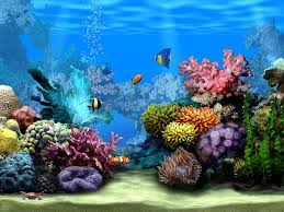 tropical aquarium wallpaper. Wonderful Aquarium Wallpaper Of Waterfalls Moving  Living Marine Aquarium 2 Animated Wallpaper   Download Freely The  For Tropical