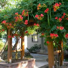 Simple Pergola planting vines on walls and planting vines on pergola 1928 by xevi.us