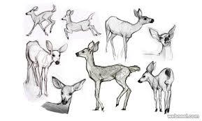 Drawn Deer Simple Pencil And In Color Drawn Deer Simple