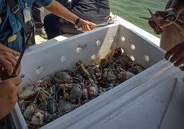 Arti Mimpi Menangkap Kepiting Laut Angka Jitu Pool303