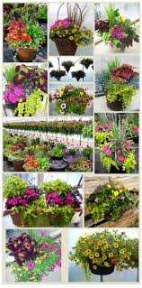 44 Best Shrubs For Containers  Best Container Gardening Plants Container Garden Plans Flowers