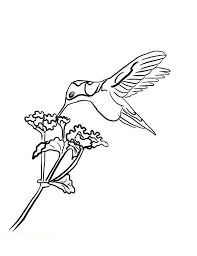 Small Picture Hummingbirds Coloring Page Free Printable Coloring Pages Coloring
