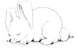 Coloring Pages Baby Bunnies Crayola Easter Bunny Rabbit Colouring P