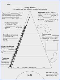 Ecosystem Pyramid Chart Ecological Pyramids Worksheet Worksheet Fun And Printable