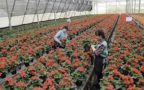 Lựa chọn nào cho nông nghiệp thông minh 4.0? - Báo Nhân Dân