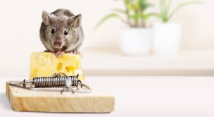 how to get rid of mice rats robert dyas