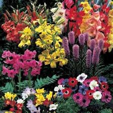 Small Picture Beautiful Bulb Garden You Ready To Enjoy An On Inspiration Decorating