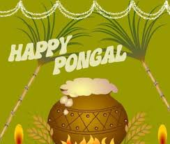an essay on pongal festival for kids children and students pongal