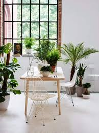 modern office plants. Ideas Of How To Display Indoor Plants Harmoniously Modern Office Plants V