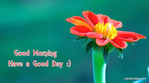 cute good morning flower wallpaper